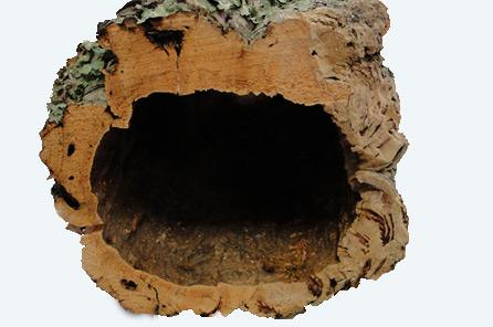 ecorce de liège pour vivarium